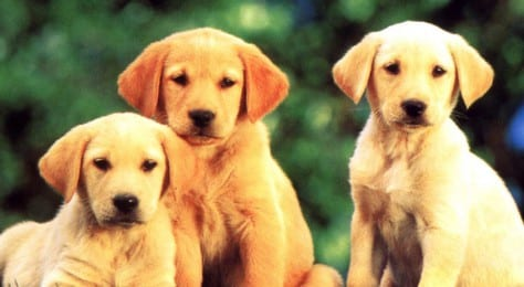 70348-dogs-we-are-family